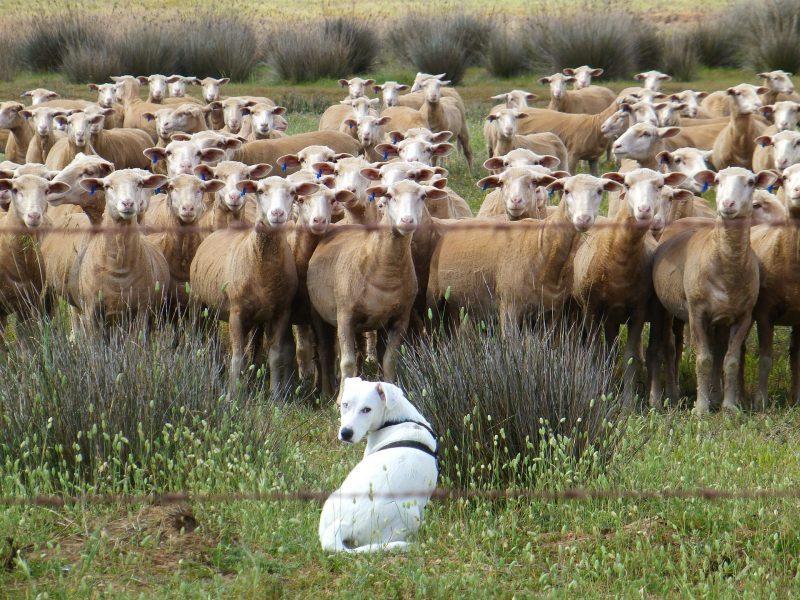 Che fare se manca qualche pecorella nel gregge?